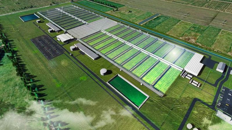 ▲ An artist's impression of Cannatek's approved Shepparton facility. Image: Cannatrek